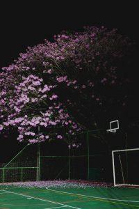 20200610 - Inauguração espaço tênis - Créditos André Patroni-17